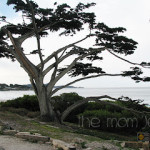 La Playa Hotel in Carmel-By-The-Sea Review