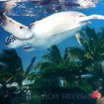 Maui Ocean Center: The Hawaiian Aquarium Review