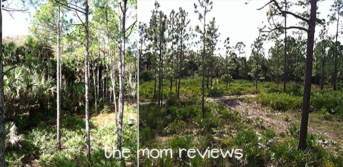 Florida Eco-Safaris: Zipline and Cypress Canopy Cycles Review