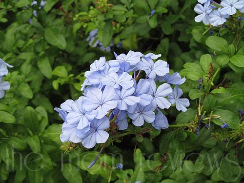 Big Island, Hawaii Photography, Floral Beauty, flowers of Hawaii, #Hawaii, #BigIsland, Hibiscus