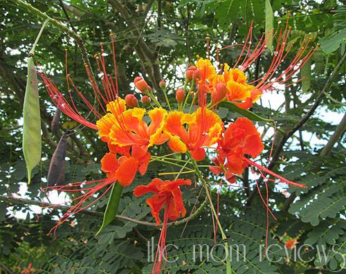 Kauai-Flora