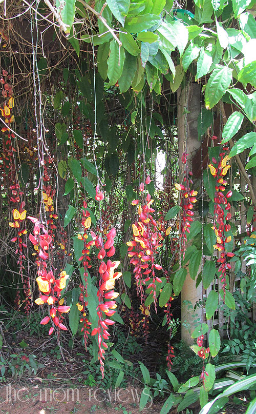 Kauai-Flora2