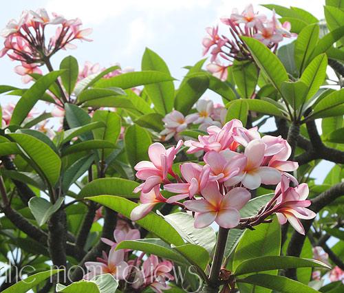 Kauai-Flora3