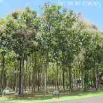Kauai:  Na Aina Kai Botanical Gardens & Sculpture Park