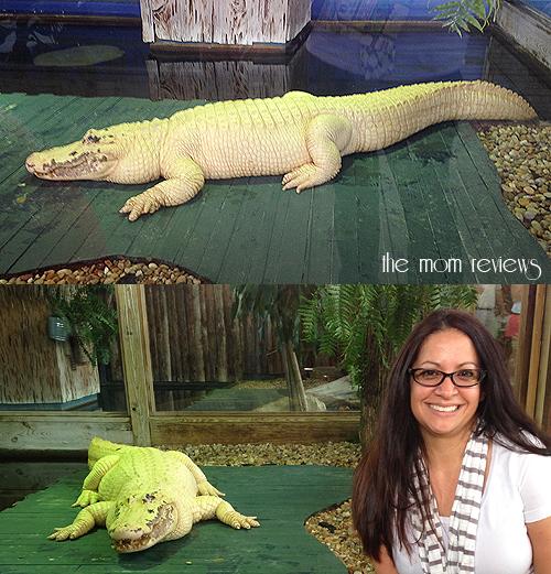 Gatorland, Kissimmee, Orlando, Florida, #Gatorland