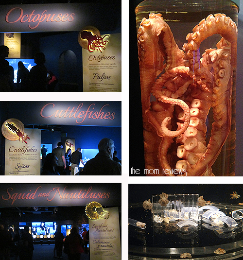 Octopus, New Exhibit at the Monterey Bay Aquarium #Tentacles #Monterey, #MontereyBayAquarium, Cephalopods