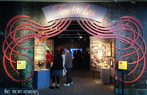 New Exhibit at the Monterey Bay Aquarium #Tentacles #Monterey #MontereyBayAquarium Cephalopods