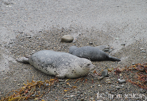 harbor Seals, #Monterey Bay, Point Lobos, Hwy 1, Big Sur #Tentacles, Monterey Bay