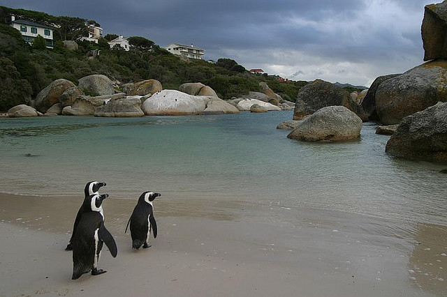 Family Holiday Bucket List, Boulders Beach, Cape Town, South Africa