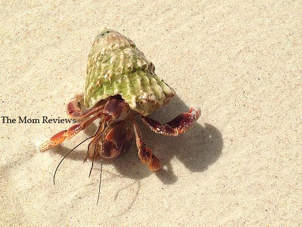 My Favorite Aruba Snapshots, Hermit Crab