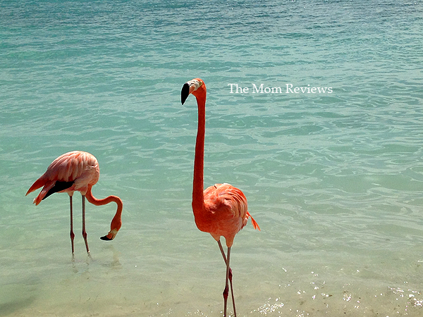 My Favorite Aruba Snapshots, Flamingos