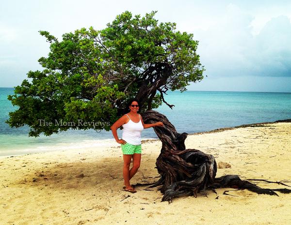 My Favorite Aruba Snapshots, Divi Divi Tree