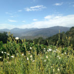 Holman Ranch Offers Summer Camps for Adults and Fitness Camps in Beautiful Carmel Valley