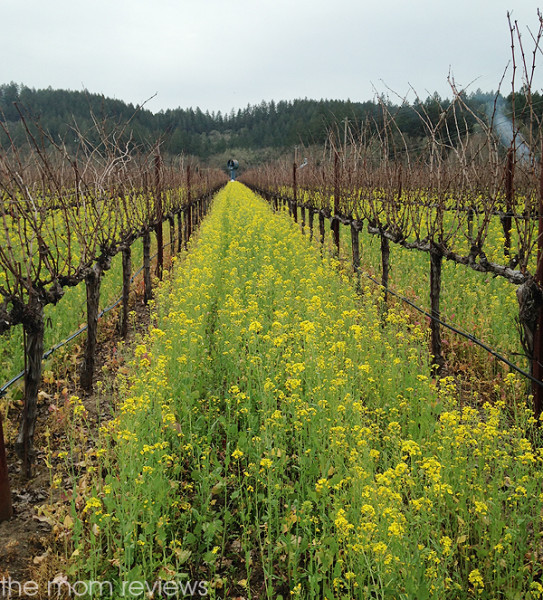 Bennett Lane Winery, Calistoga