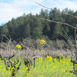 Visit 5 Great Wineries in Calistoga @VisitCalistoga