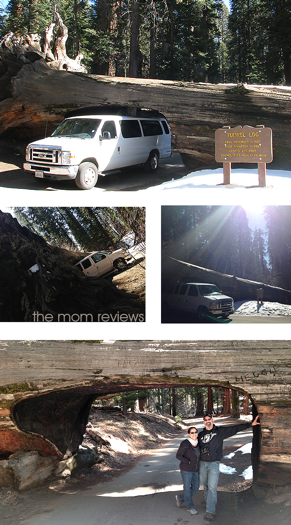 4 Must See Sights to Visit in Sequoia National Park, Tunnel Log