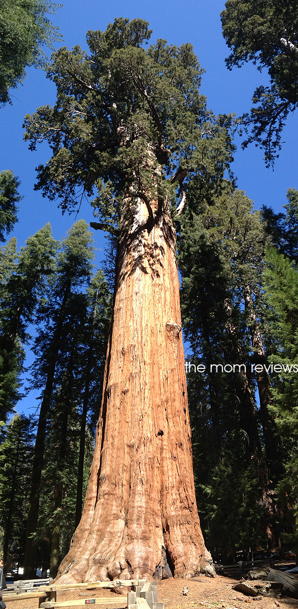 4 Must See Sights to Visit in Sequoia National Park @VisitSekiParks, General Sherman Tree